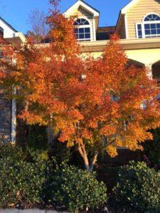 website-november-25-2016-fall-colors-tree