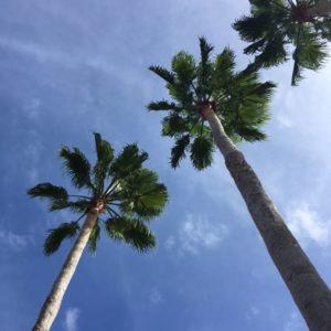 website-november-30-2016-palm-trees-orlando-fl